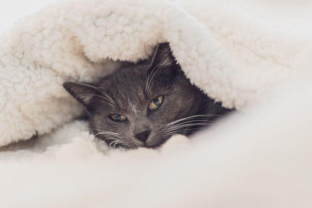 Allergie dei gatti