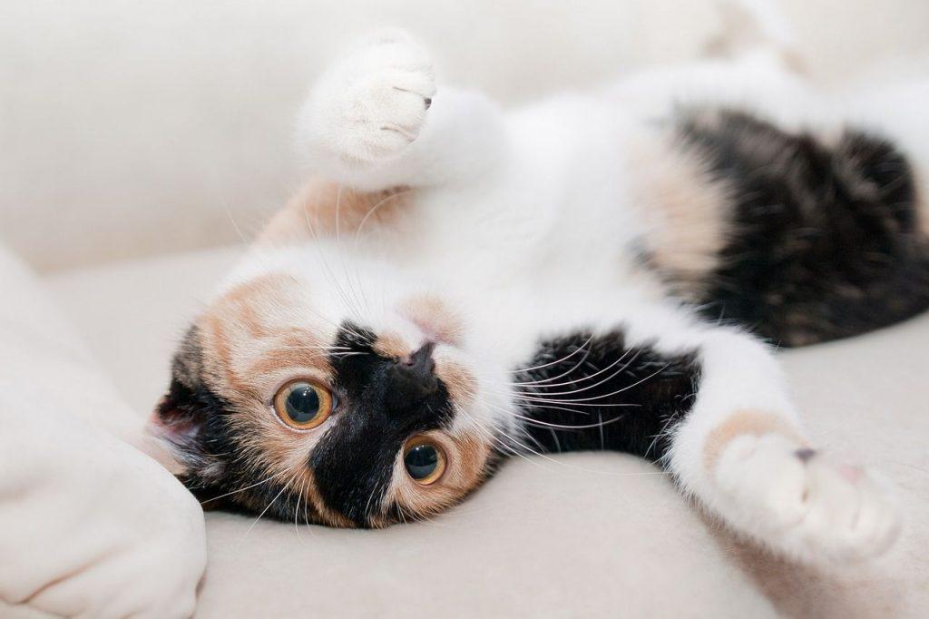 Cos'è la FIV Aids del gatto