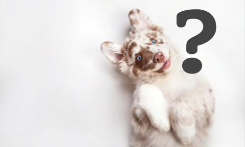 Eta dei cani: come calcolare l'età del tuo cane