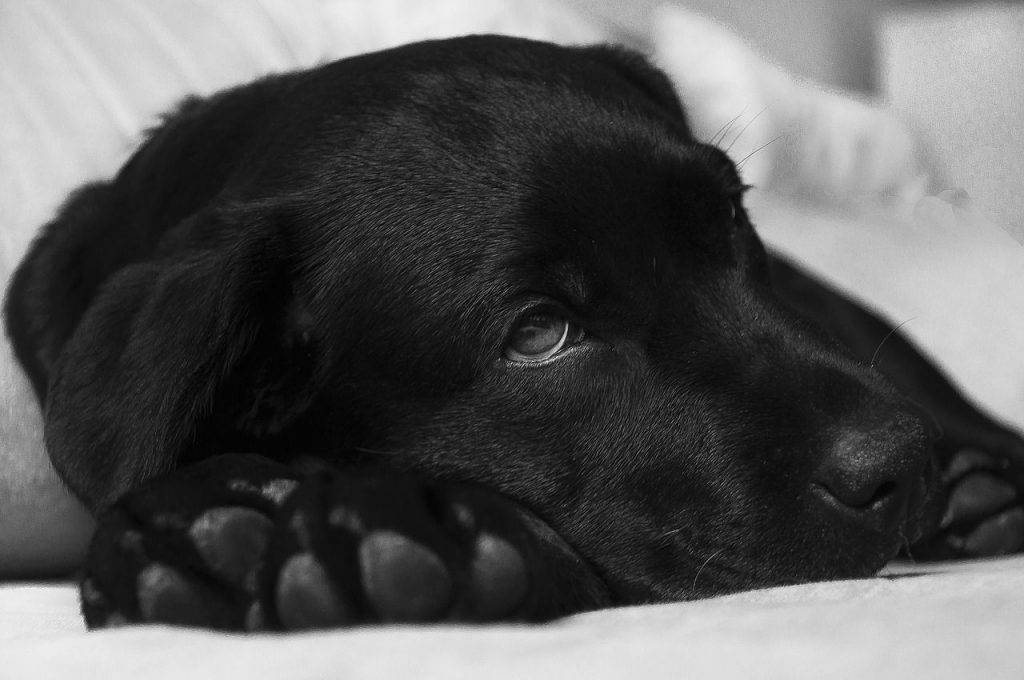 Malattie Cani