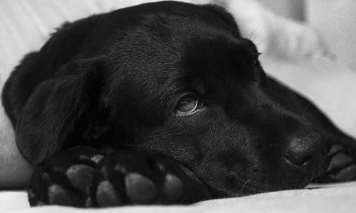 Malattie dei cani: le principali e suggerimenti utili