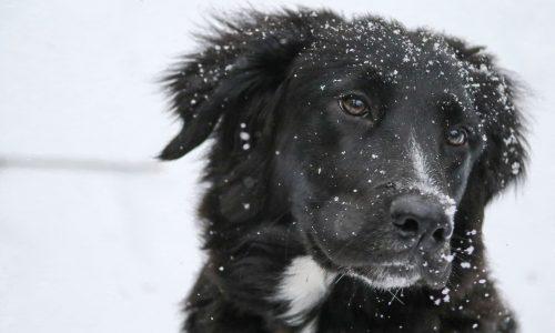 Forfora cane: cos'è