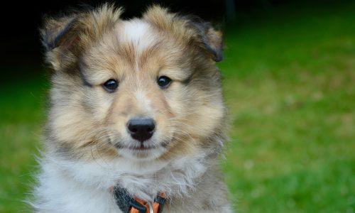 Cos'è la sterilizzazione nel cane