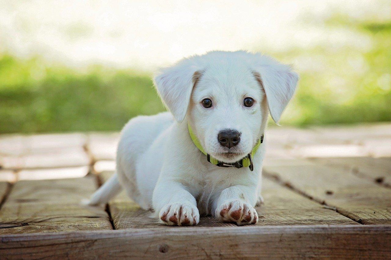 Sterilizzazione cane