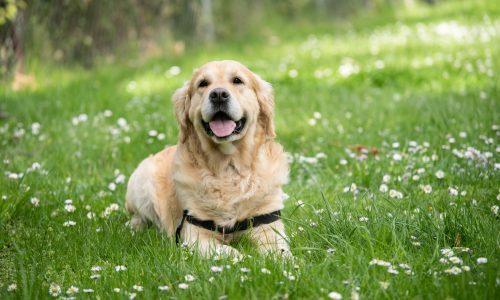 Perché il mio cane mangia erba: le 5 possibili cause