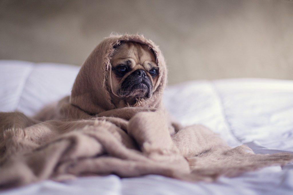 Colpo di calore cane