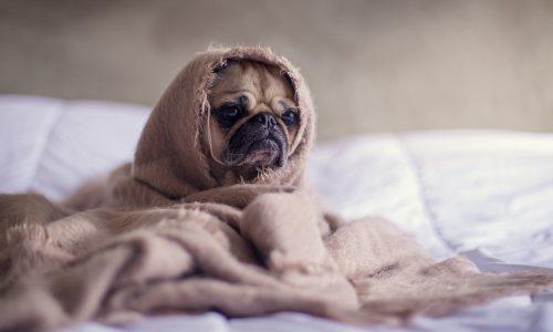 Colpo di calore cane: cos'è