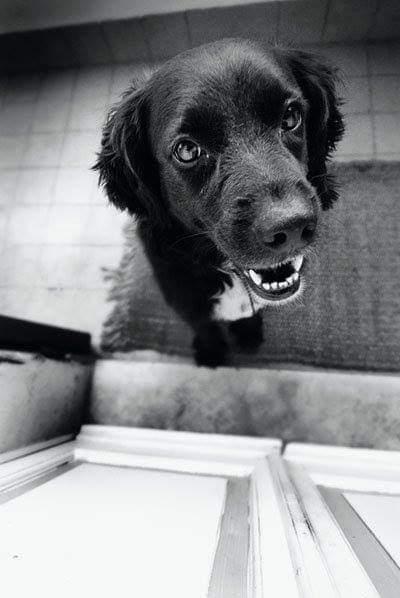 Prendersi cura dei denti del cane