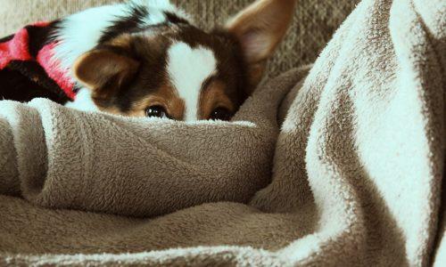Cane trema: le otto possibili cause per cui il cane trema e cosa fare