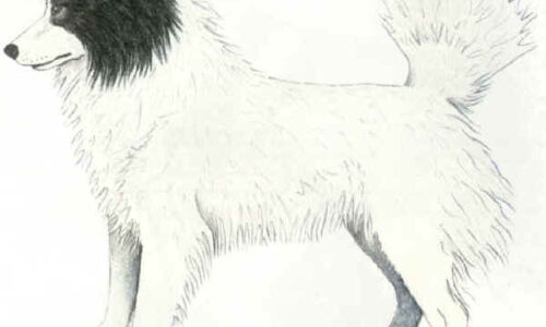 Cane da Orso dei Tahltan