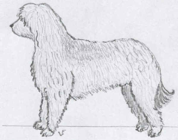 Cane da Pastore Egiziano di Armant