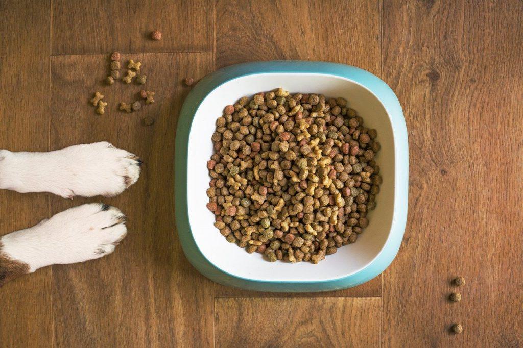 Fermenti lattici per cane in polvere