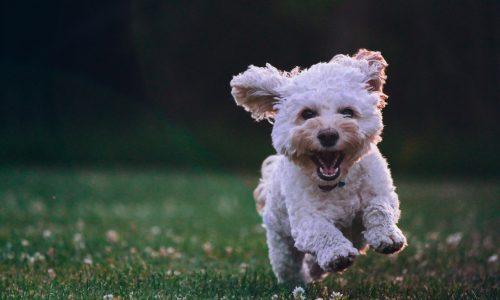 Fermenti lattici per cane: guida all'acquisto con consigli pratici d'uso