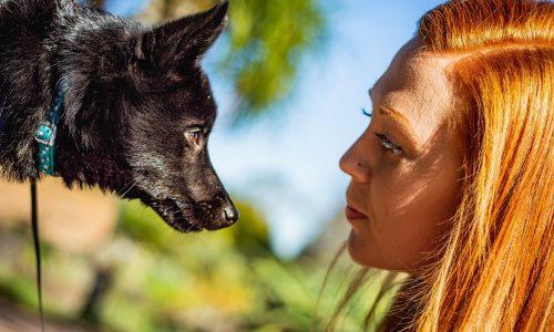 Occhi Rossi cane: perché possono essere segnali importanti