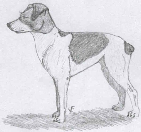 Terrier di Skane