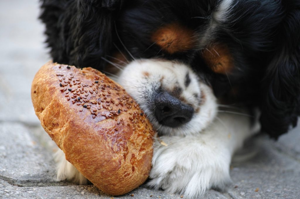 Fermenti lattici per cane a cosa servono