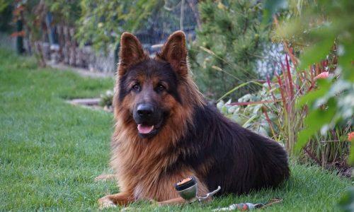 La vita media di un cane: indicazioni generali