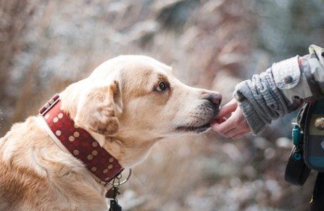 Alito cattivo cane: devo preoccuparmi