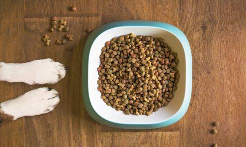 Ecco le migliori crocchette sul mercato per la salute del tuo cane